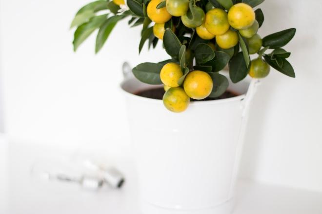 Citrus plant - Coco Lapine